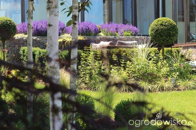 Ogród Sylwii od początku cz.II - strona 1047 - Forum ogrodnicze - Ogrodowisko