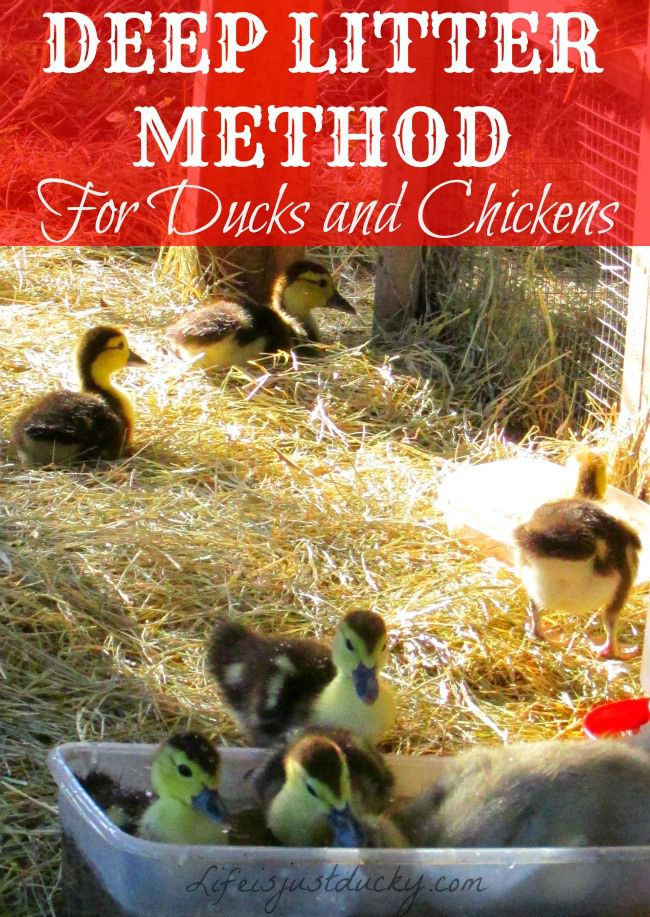 1000 images about coops and more on pinterest chicken for Duck run designs