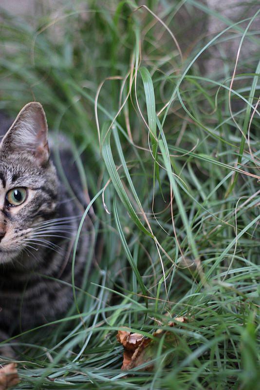 Yoshi #cat