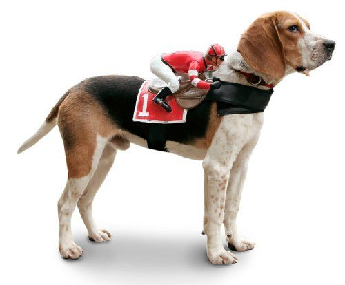 Best Harness For Deep Chested Dog