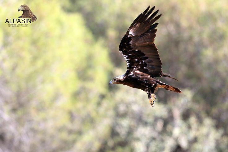 Disfruta de la fotografia de la naturaleza más salvaje de Sierra Morena en nuestras mañanas de verano. Hide fotográfico de Alpasin. Adamuz (Córdoba)