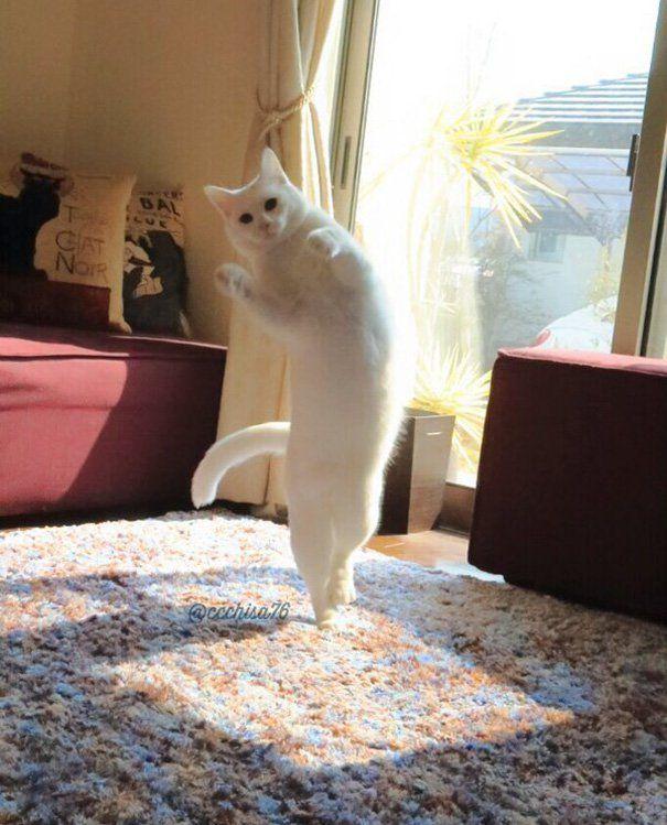 Gato bailarino encanta internet com saltos e passos de balé; confira
