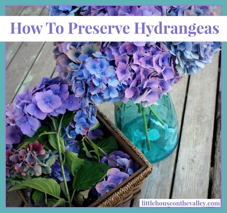 How To Preserve Hydrangeas - Little House on the Valley