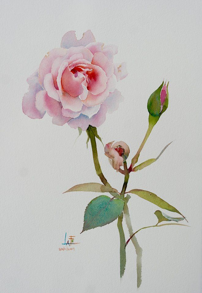 1000 Ideas About Watercolor Rose Tattoos On Pinterest
