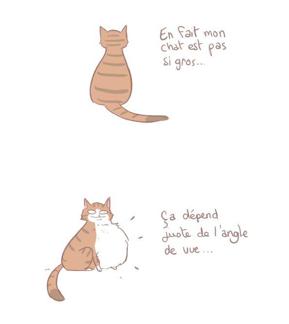 Le bide du chat - YATUU - blog BD