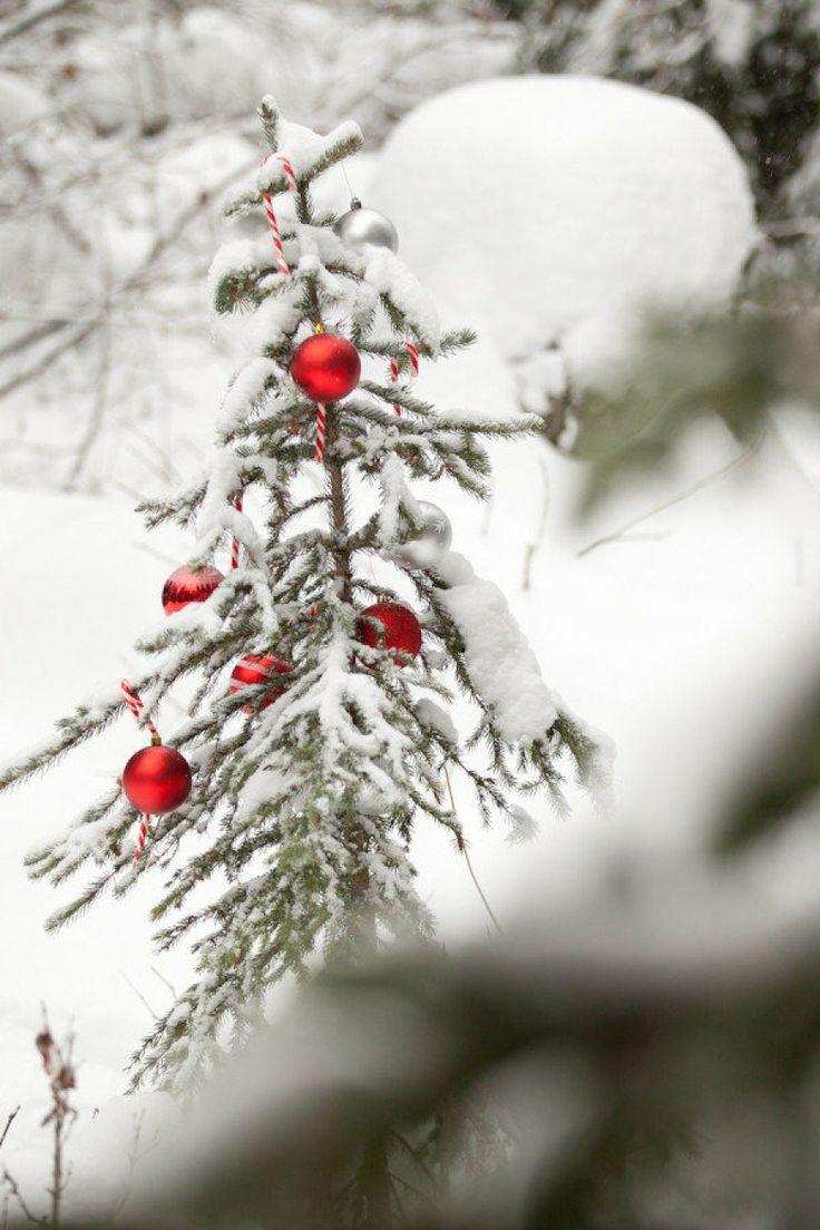 138 best O * T A N N E N B A U M images on Pinterest | Christmas ...