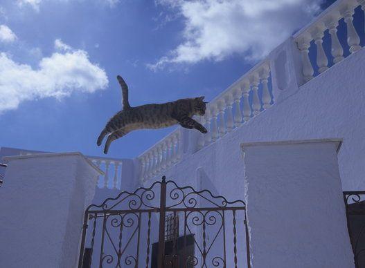 凄いジャンプをする猫たち