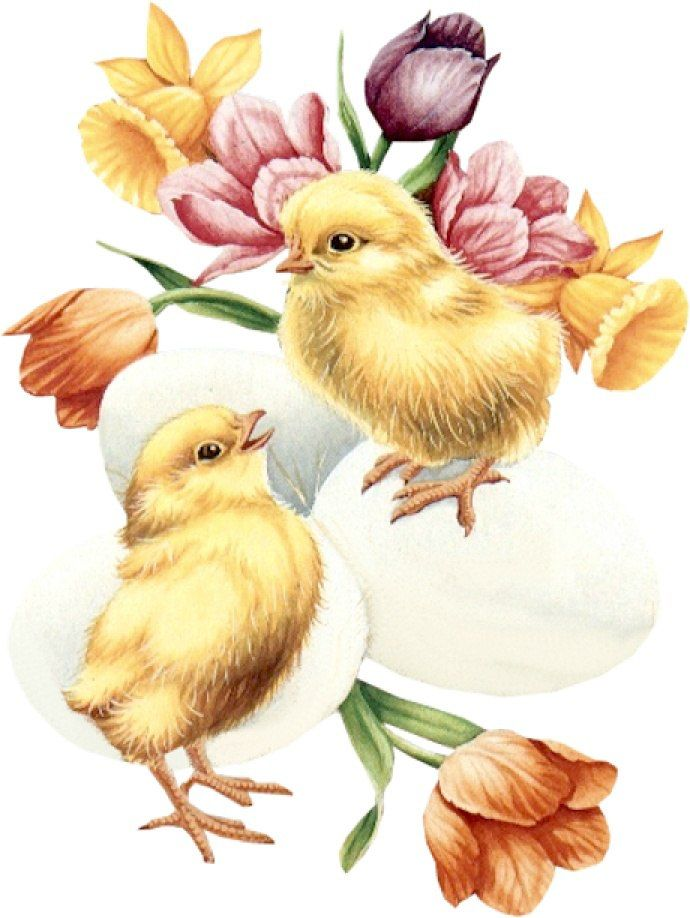 цыплята открытки ребенка