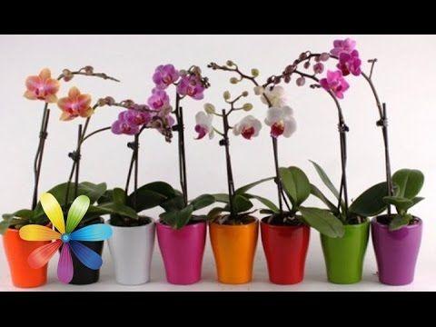 Как одну орхидею превратить в 100? - Все буде добре - Выпуск 569 - Всё будет хорошо 23.03.15 - YouTube