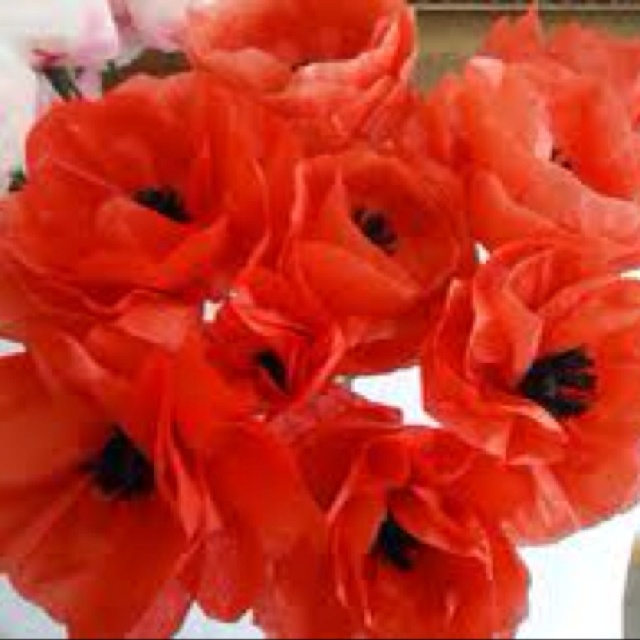 These poppies are made of tissue paper, super cute!