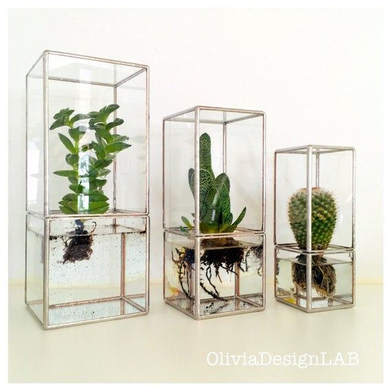 Hydroponic Terrarium Buy The Set Of 2 Small And Medium Size Hydroponic Glass Box Hydroponic Garden Hydr Terrarium Ideen Hydrokultur Garten Terrarium Kaufen
