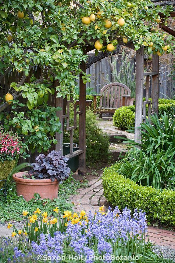 citrus growing on arbor trellis over brick path leading to secret garden