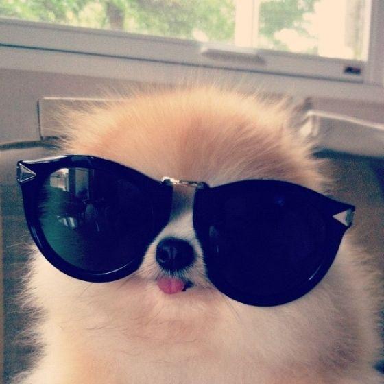 I got specks appeal! #pup #cute