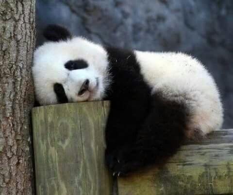 🐼Te sueño 💕