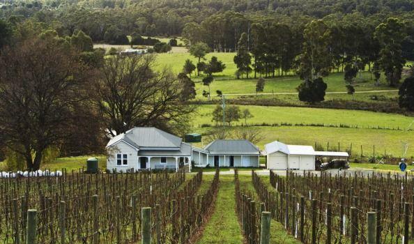 Apogee winery, run by Andew Pirie.