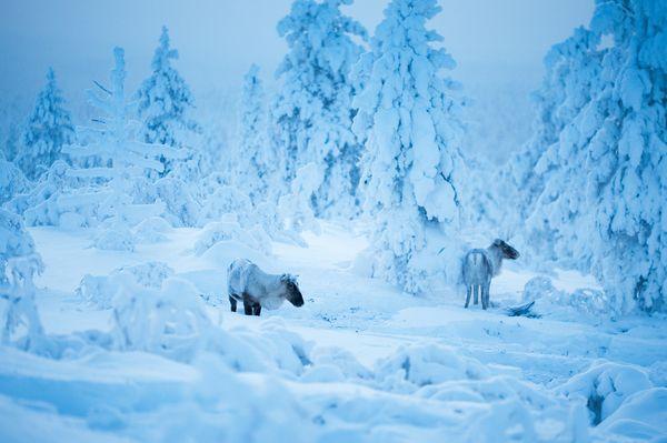 Wonderland by Nina Lindfors, via Behance