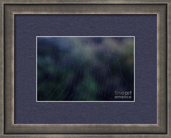 Evening Framed Print featuring the photograph Evening Web by Sverre Andreas…