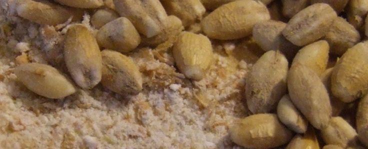 Antico orzo delle valli bellunesi | DreamEat | Discover and Taste