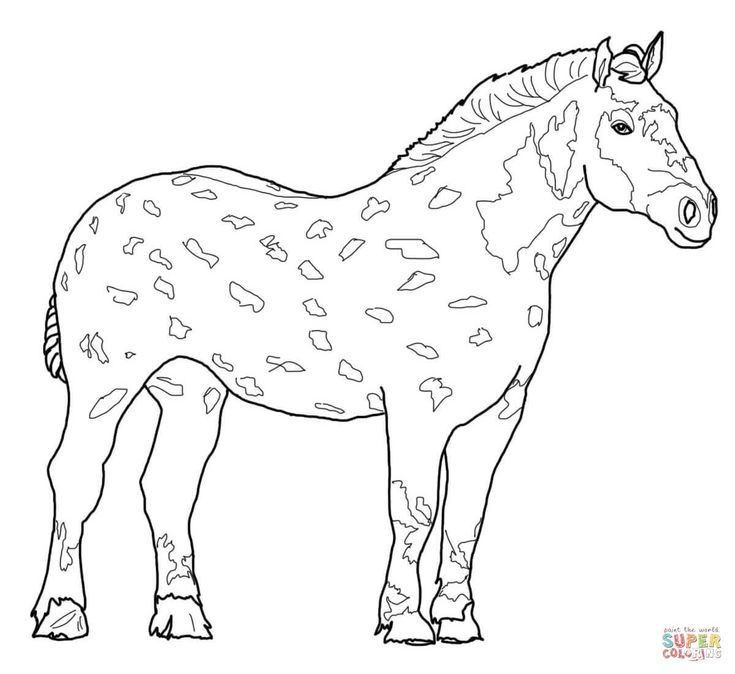 percheron horse coloring page from horses category select from 28249 printable crafts of cartoons nature animals bible and many more