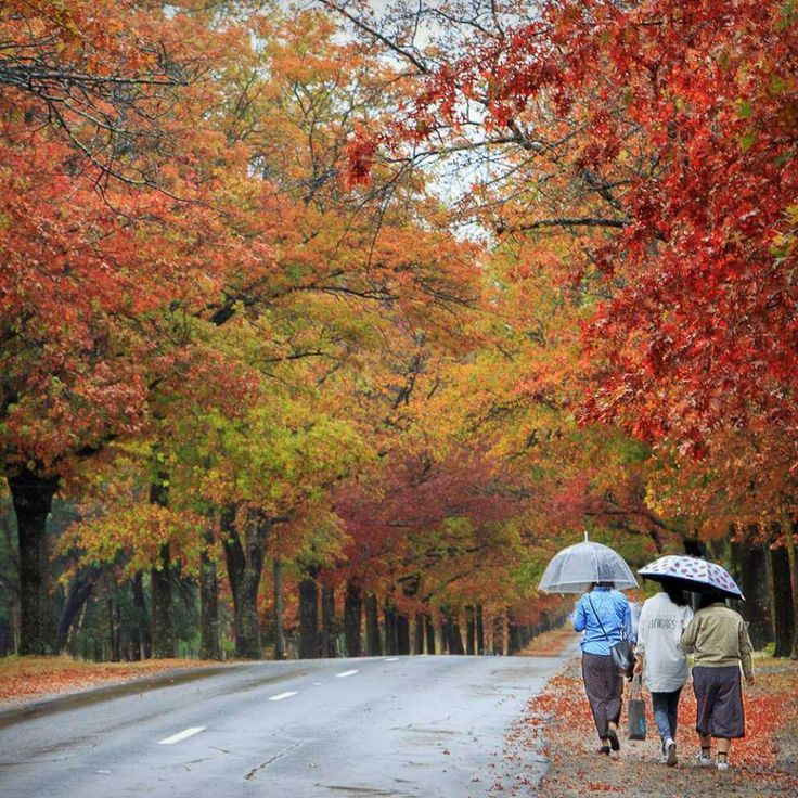 avenue of honour macedon - 10 stunning locations to view autumn leaves near Melbourne