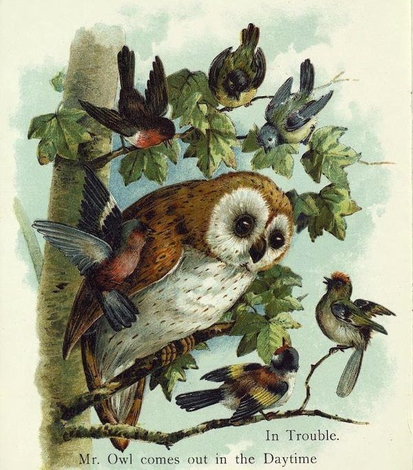 A story book page with an Owl and other birds