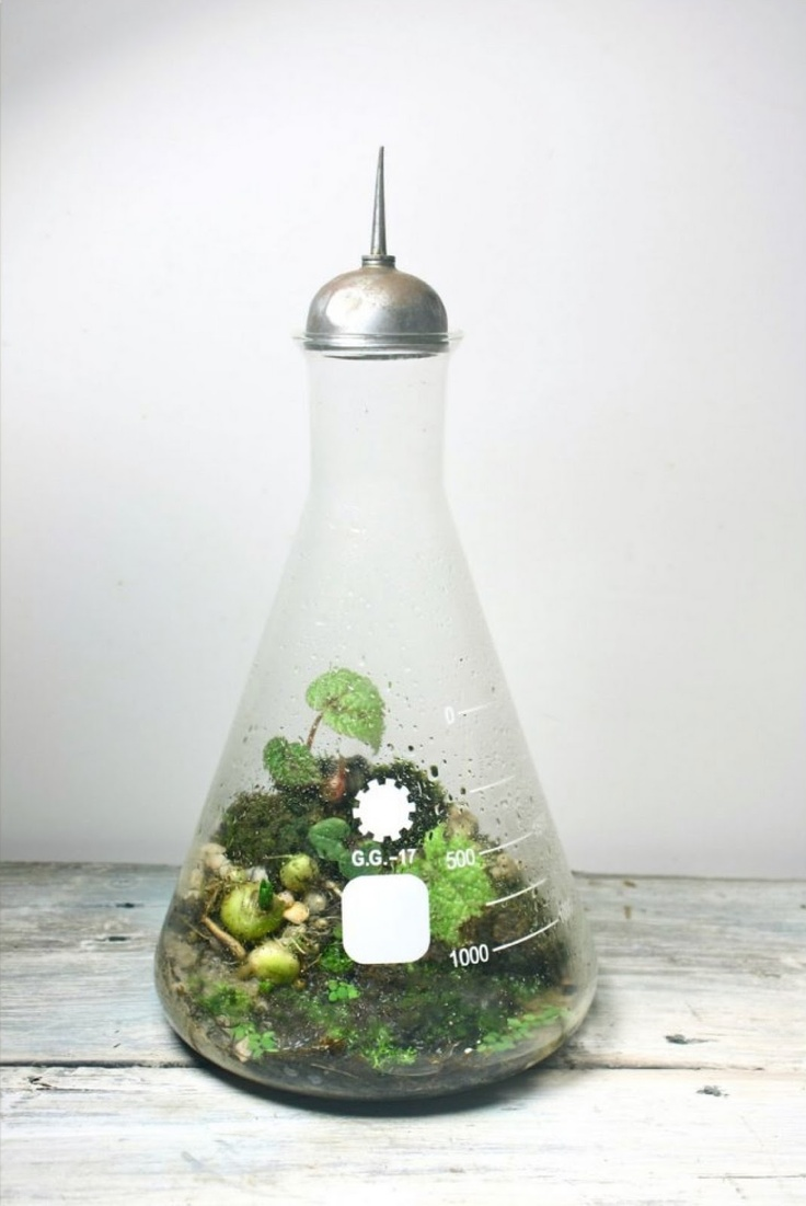 Awesome beaker terrarium, great idea for a window sill.