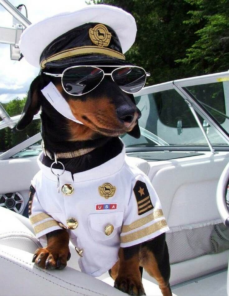 Celebrate Halloween with the coolest, funniest, most entertaining dog costumes on the planet! 29 Greatest Pet Costumes EVER.