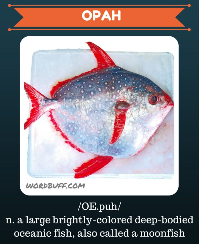 17 best images about u tube words on pinterest show for Warm blooded fish