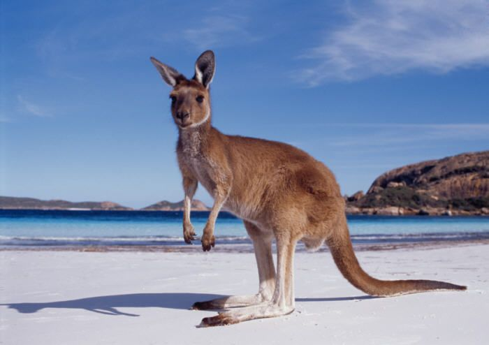 In Australia I'll chill on the beach- apparently with kangaroos- and watch Ian surf.