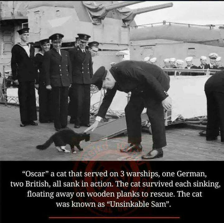 """Unsinkable Sam"", the warship cat."