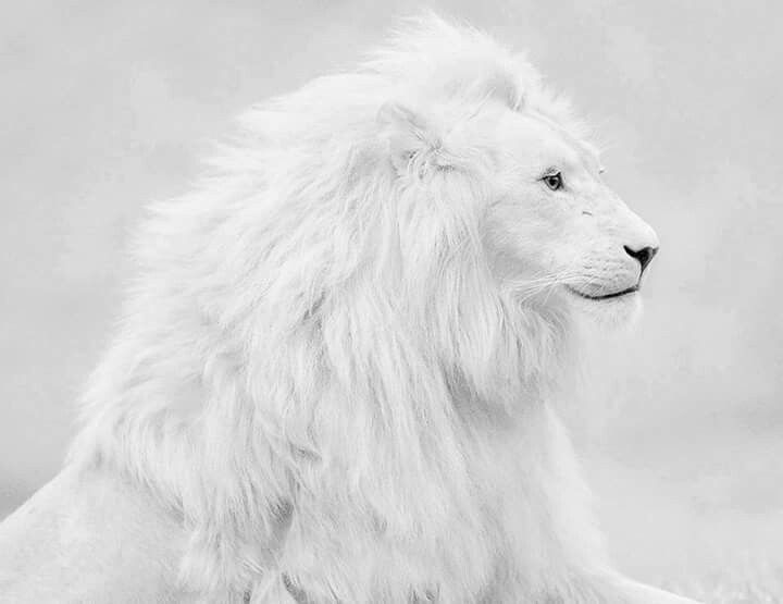 Best Tiere Images On Pinterest Lion Art Wild Animals And A - Powerful and intimate black white animal portraits by luke holas