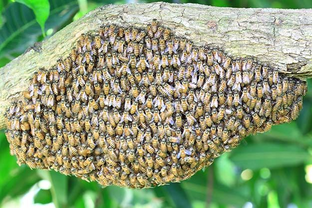 How to Raise Honey Bees | How To Be A Successful Beekeeper, check it out at http://survivallife.com/how-to-raise-honey-bees/