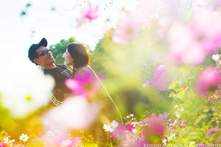 秋桜畑の中で頭ポンポン、からの~ @夕焼け秋桜エンゲージメントフォト - ○○しゃしんのじかん http://blog.goo.ne.jp/moriken_photo/