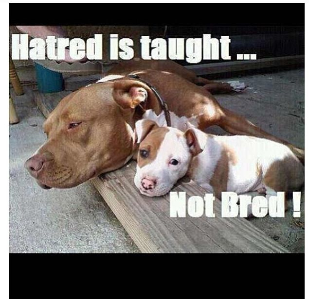 Makes me so sad they have a heart I have never experienced. They love over and above to their death. Pitt Bull Lover for Life