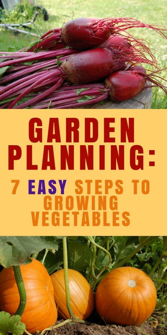 Garden Planning: 7 Easy Steps to Growing Vegetables | Tiny