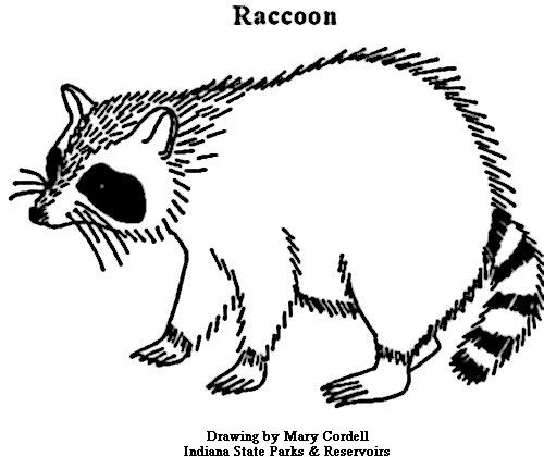 Line Drawing Raccoon : Best images about line drawings for literacy on