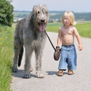 """Irish wolfhounds   When this dog had to be put to sleep, this little boy over heard his parents wonder why dogs didn't live as long as people. He knew the answer he said. """" ''People are born so that they can learn how to live a good life -- like loving everybody all the time and being nice, right?'' The Six-year-old continued,     ''Well, dogs already know how to do that, so they don't have to stay as long.''"""