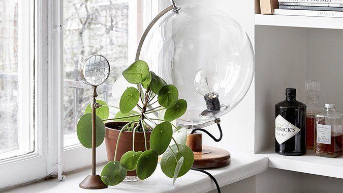 En plus d'être tropical et tendance, le Pilea est super facile à cultiver chez soi ! http://www.deco.fr/jardin-jardinage/plante-interieur/actualite-826738-pilea-plante-monnaie-chinoise-plante-missionnaire.html