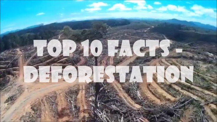 10 Deforestation Facts