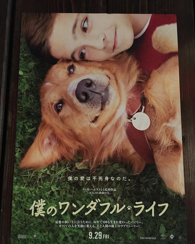 今日の映画🎬 『僕のワンダフル・ライフ』 ✩ いっぱい笑って いっぱい泣いて泣いて 泣いてましたぁぁぁ😭😂 隣で旦那様も…😢😅 本当に本当に 観て良かった〜 素敵な映画でした💕 泣きすぎてお腹空いた〜w ✩ #僕のワンダフルライフ #シネマサンシャイン池袋 #池袋 #Tokyo #映画 #犬 #dog #愛犬 #感動的