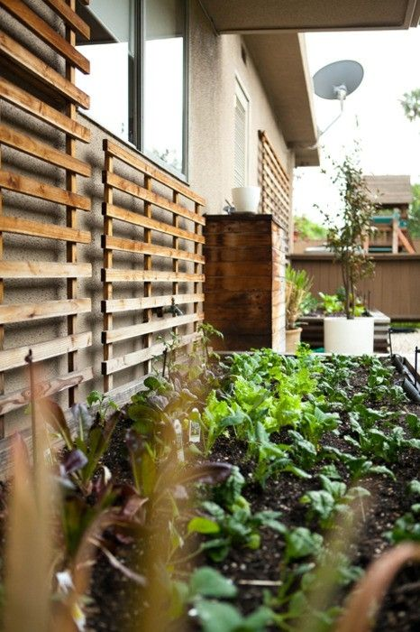 Vegetable Garden On Side Of House Trellises Are Stained