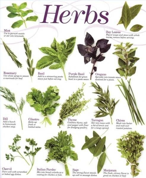Herbal Medicine for Anxiety