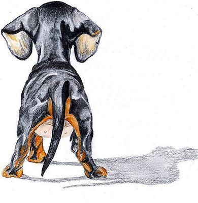 Dachshund Smooth Dog Portrait Canine Art