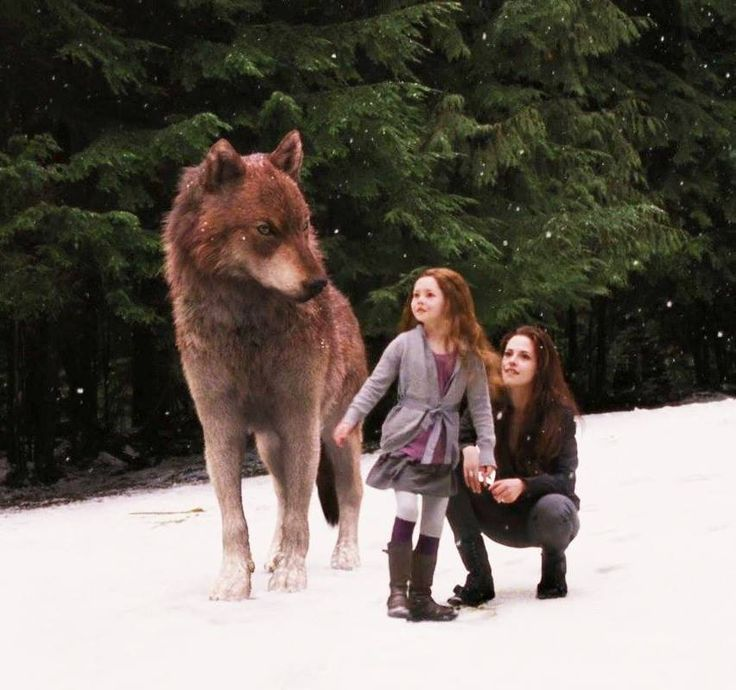 Jacob And Renesmee Twilight Saga Quotes. QuotesGram
