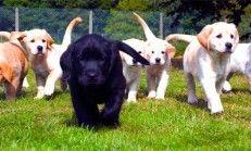 Köpek Bakımında Nelere Dikkat Edilmeli?