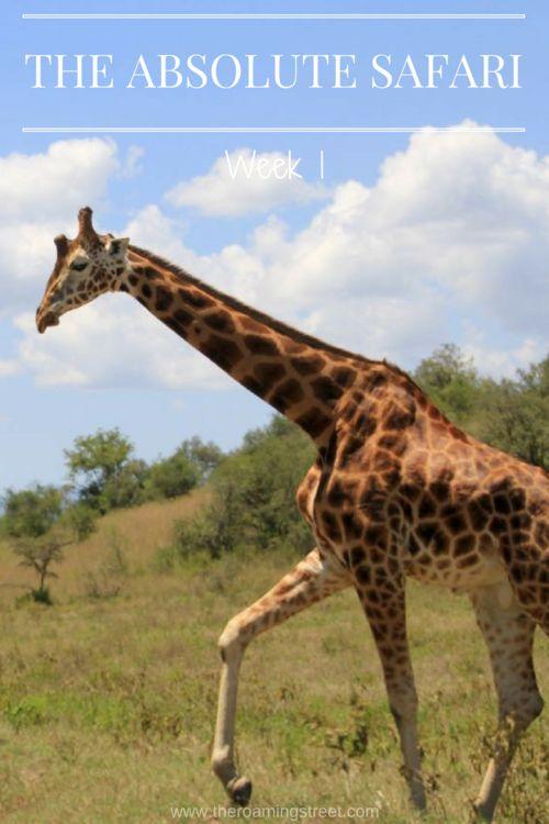 The Absolute Safari Week 1: Kenya — The Roaming Street