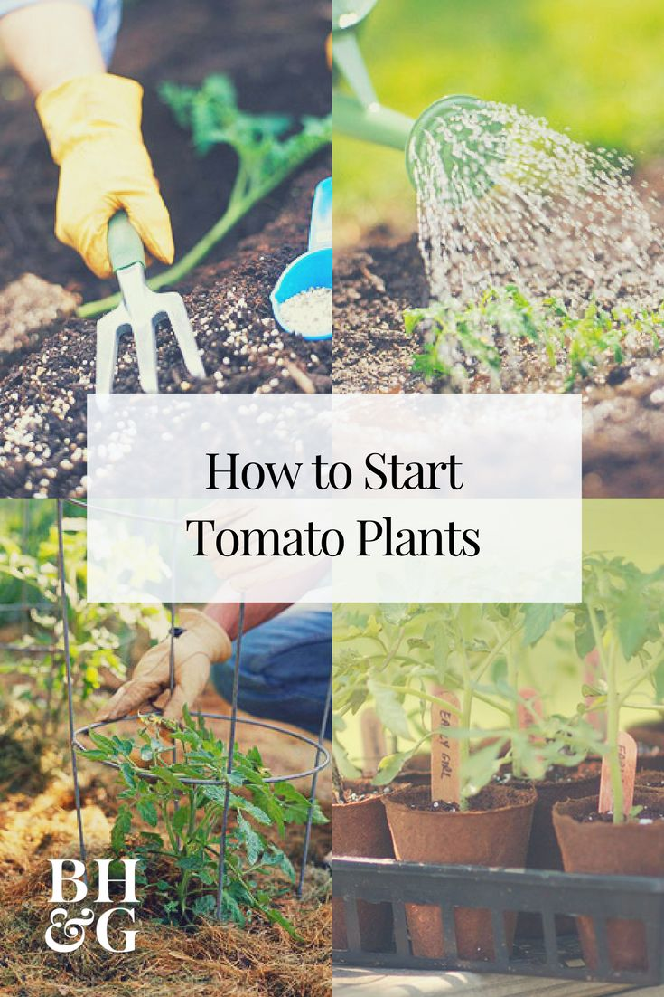 Get your edible garden off to a great start with these tips that will teach you how to grow a perfect tomato garden! Your tomatoes will get a strong start with these 10 helpful garden insights. #growtomatoes #tomatoes #foodgarden #gardening