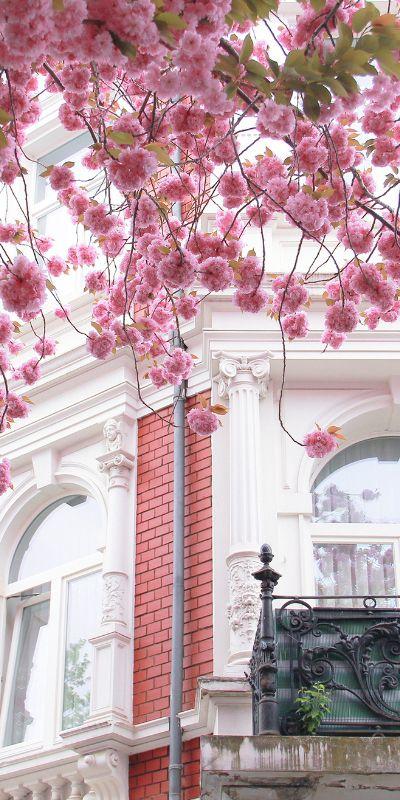 Frühling - Kirschblüte in Paris