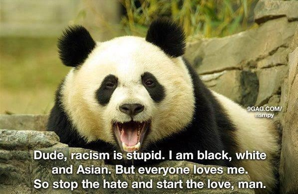 luv this quote & pic hopefully someday more will see its tru meaning instead of just agreeing in a artificial manner: Animals, Quotes, Truth, Funny Stuff, True, Things, Racism, Pandas