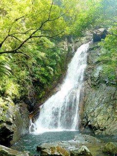 沖縄といえば海という人が多いと思います 実は滝もいいんですよ 今回紹介したいのは比地大滝 比地大滝の落差は沖縄本島ナンバーワンの25.7m 滝まで片道約40分の熱帯雨林には遊歩道が整備されていおり普段着のみならず靴も普段履きでOK気軽に楽しめる滝です ぜひ沖縄の滝を見てみてください tags[沖縄県]